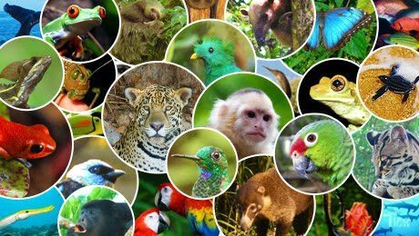 COSTA RICA CELEBRATES THE WORLD'S MOST ADVANCED ANIMAL DEFENCE LAW