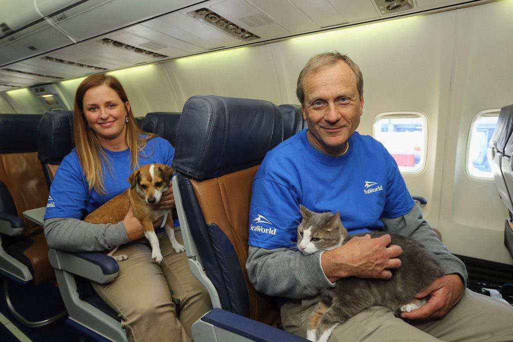 Some pet owners like to travel with them.