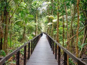 One of the main trails of the Cahuita National Park.
