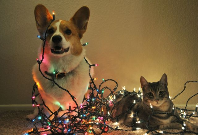 Home pets are likely to mess with Christmas ornaments.