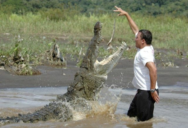 The feeding a crocodile act looks as a very dangerous act.