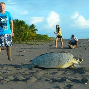 Turtle watching is a popular activity for couples in Tortuguero.