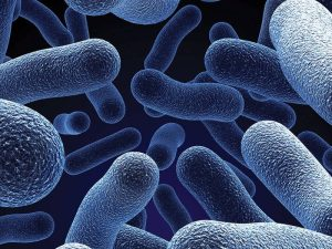 Probiotics are very important agents for the bacterial flora.