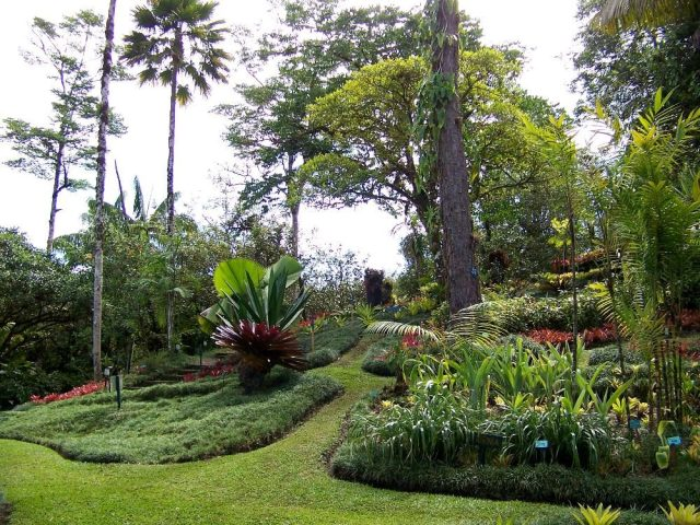 A section of one of the most visited Botanical Gardens