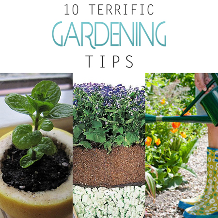 10 Terrific Gardening Tips
