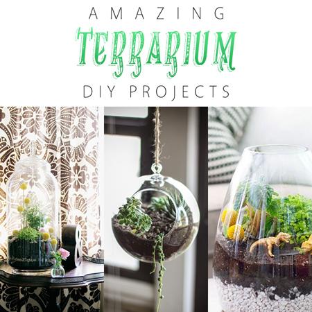Amazing Terrarium DIY Projects