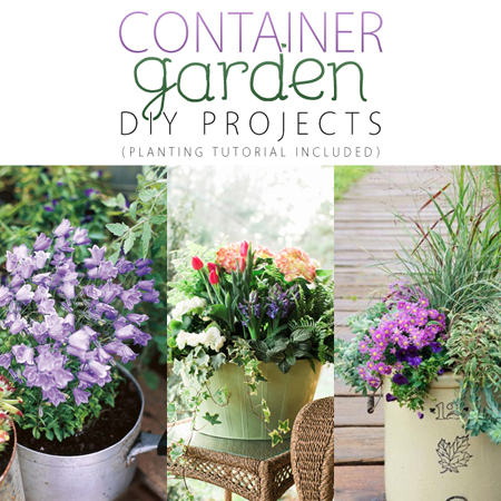 Container Garden DIY Projects