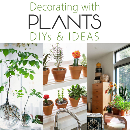 Decorating with Plants DIYs and Ideas