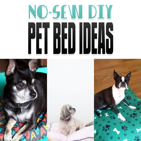 No-Sew DIY Pet Bed Ideas