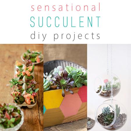 Sensational Succulent DIY Projects