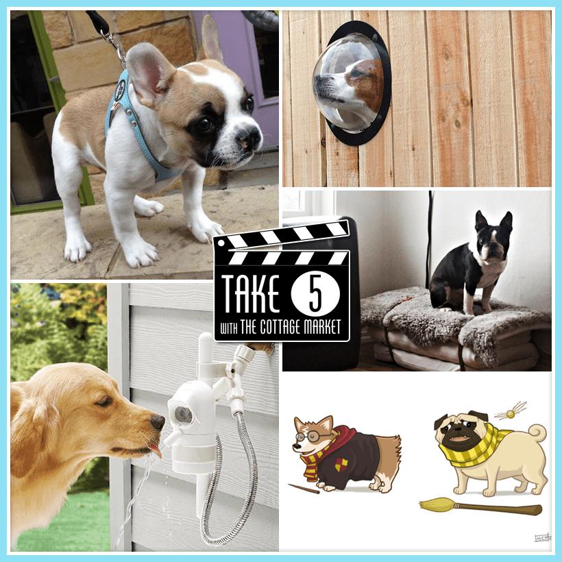 Take Five: Cool Dog Stuff