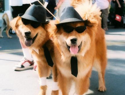 blues-brothers-dog-costume