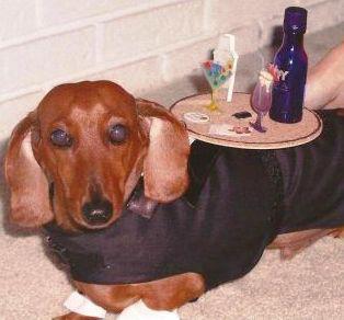 cocktail-weiner-dog-costume