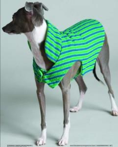 dogcoat17