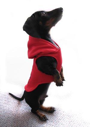 dogcoat24