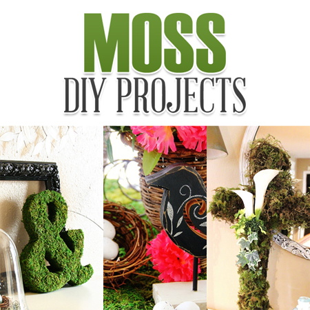Moss DIY Projects