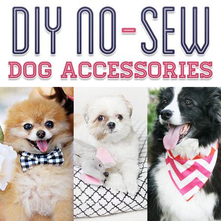 DIY No Sew Dog Accessories