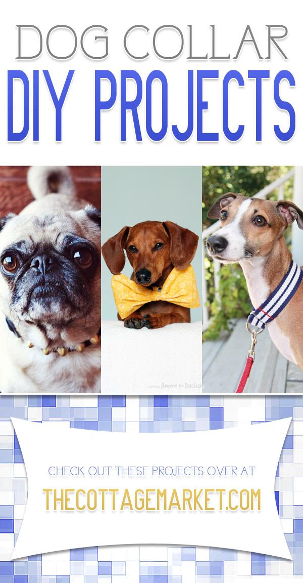Dog Collar DIY Projects