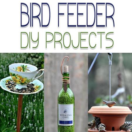 Bird Feeder DIY Projects