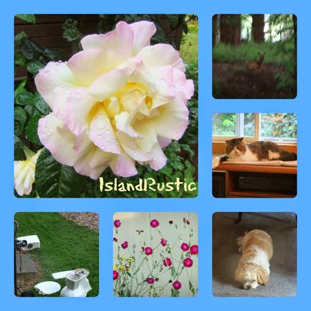 Island Rustic