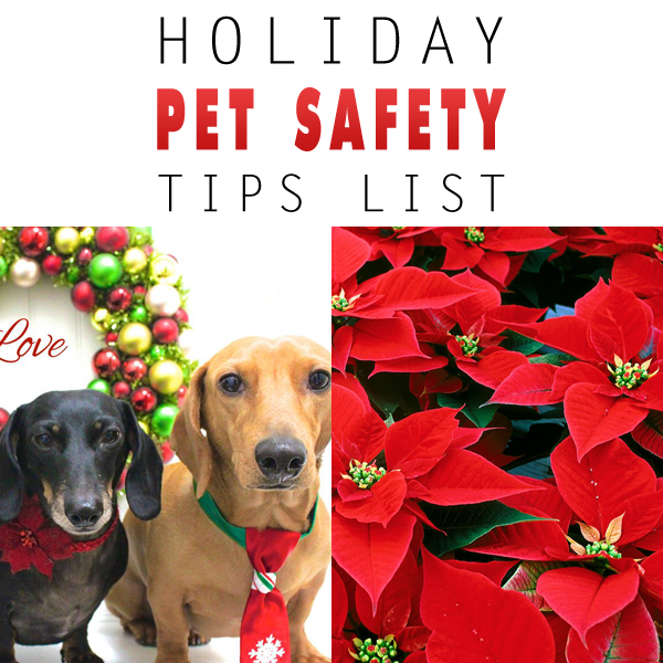 Holiday Pet Safety Tips List
