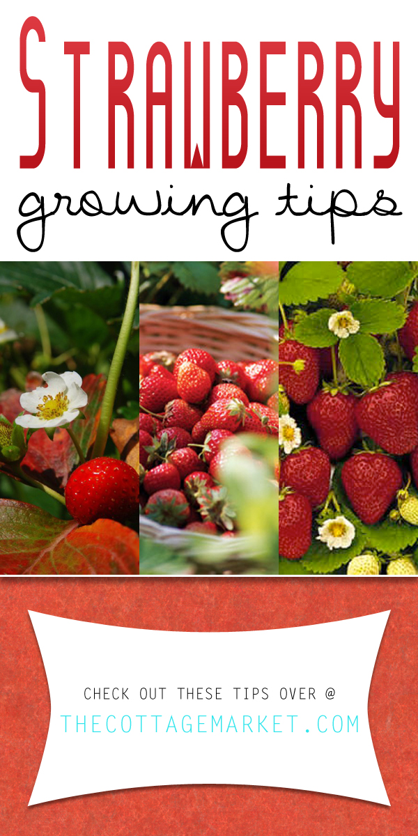 strawberryTOWER