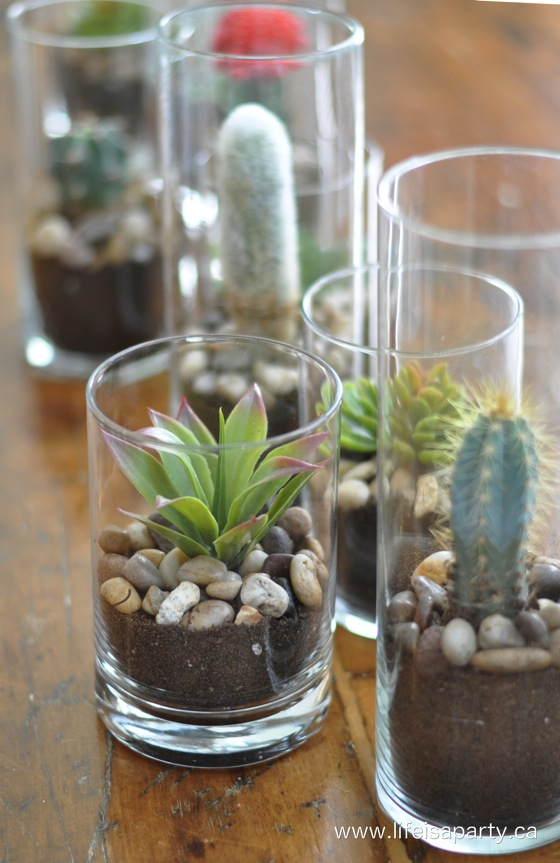 cactus-and-succulents-in-a-vase-center-piece-4