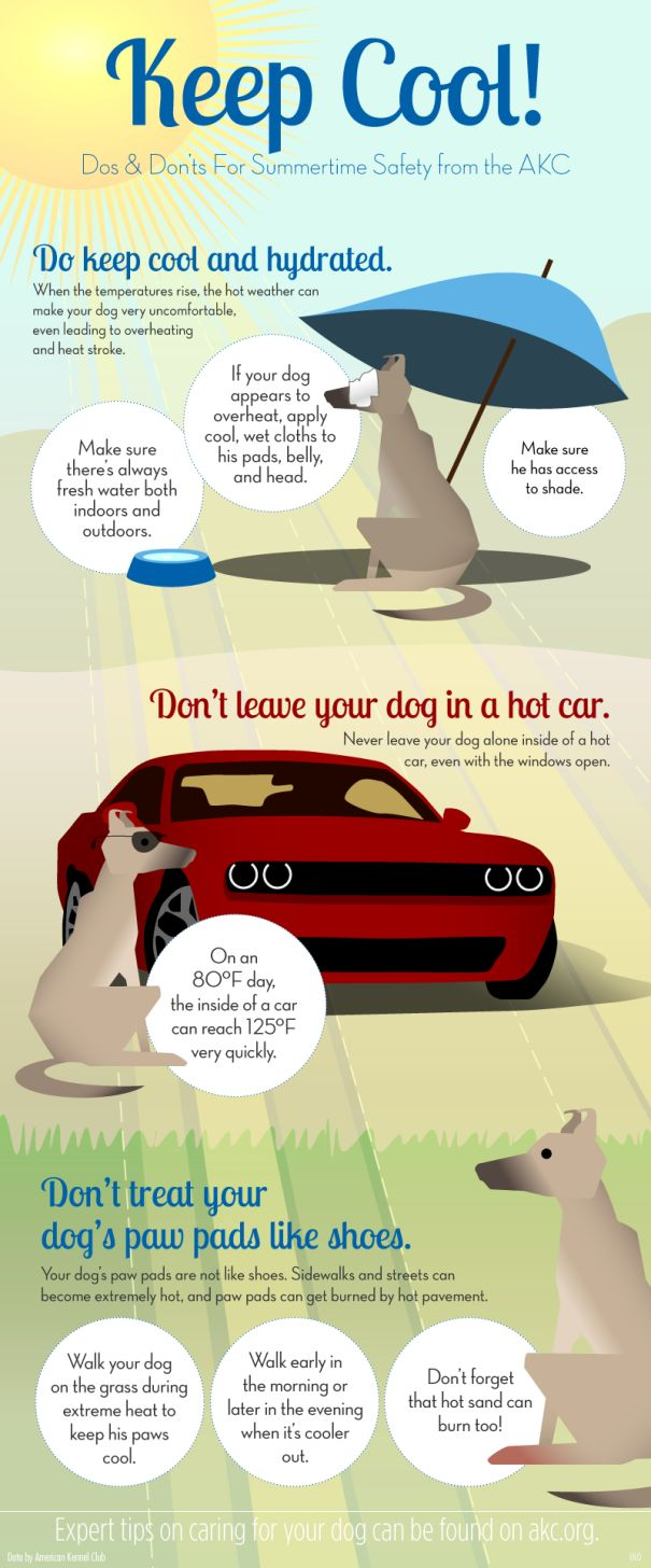 Pet Safety Infographic - keep cool: how to keep pets hydrated in hot weather