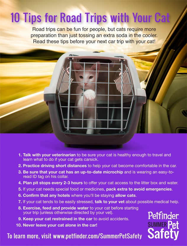 Pet Safety Infographic - safety tips for road tripping with cats