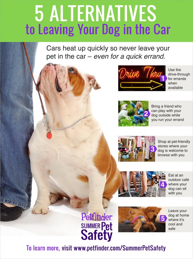 Alternatives to Leaving Your Dog in The Car - Pet Safety infographic