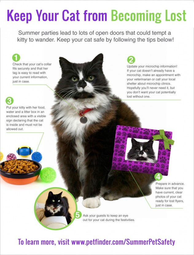 Pet Safety Infographic - how to prevent your cat from becoming lost