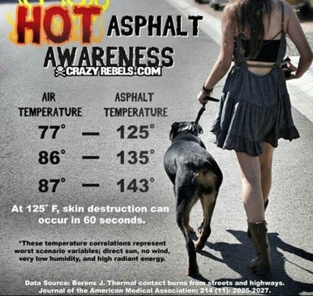 Pet Safety Infographic - Hot Asphalt Awareness