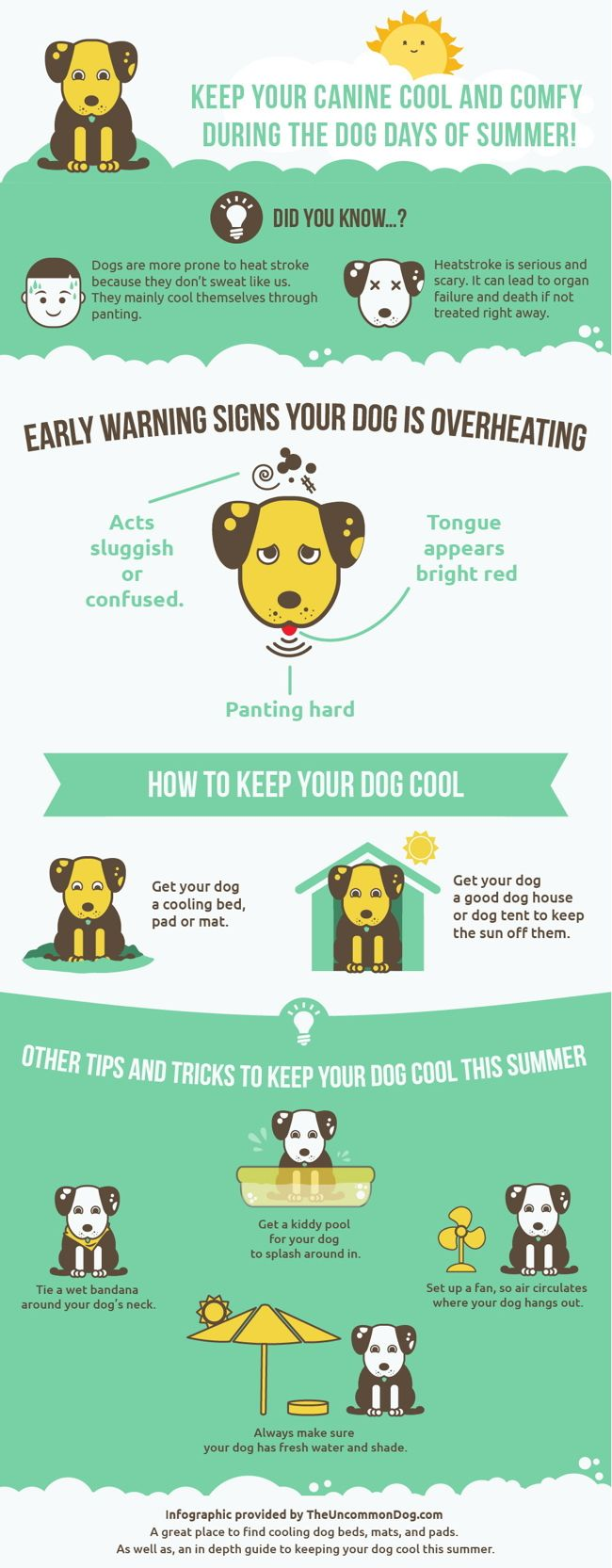 Pet Safety Infographic - warning and awareness for dog safety in the summer