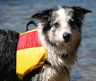 Dog life jackets are crucial to keeping pets safe around water