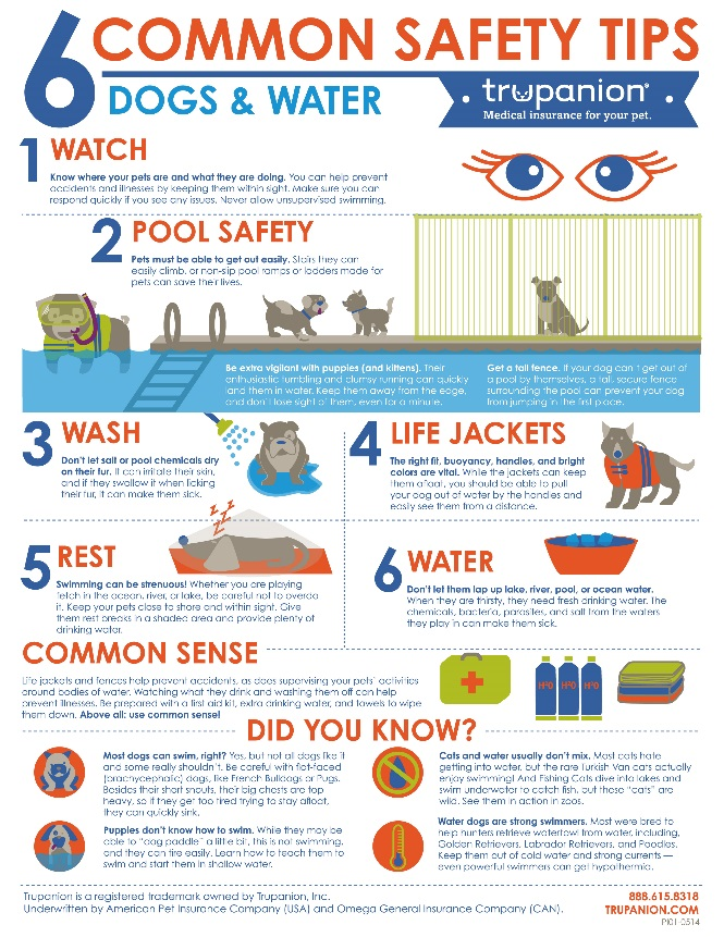 Pet Safety Infographic - common safety tips for dogs around water