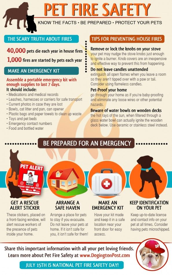 Pet Safety Infographic | Fire Safety with Pets