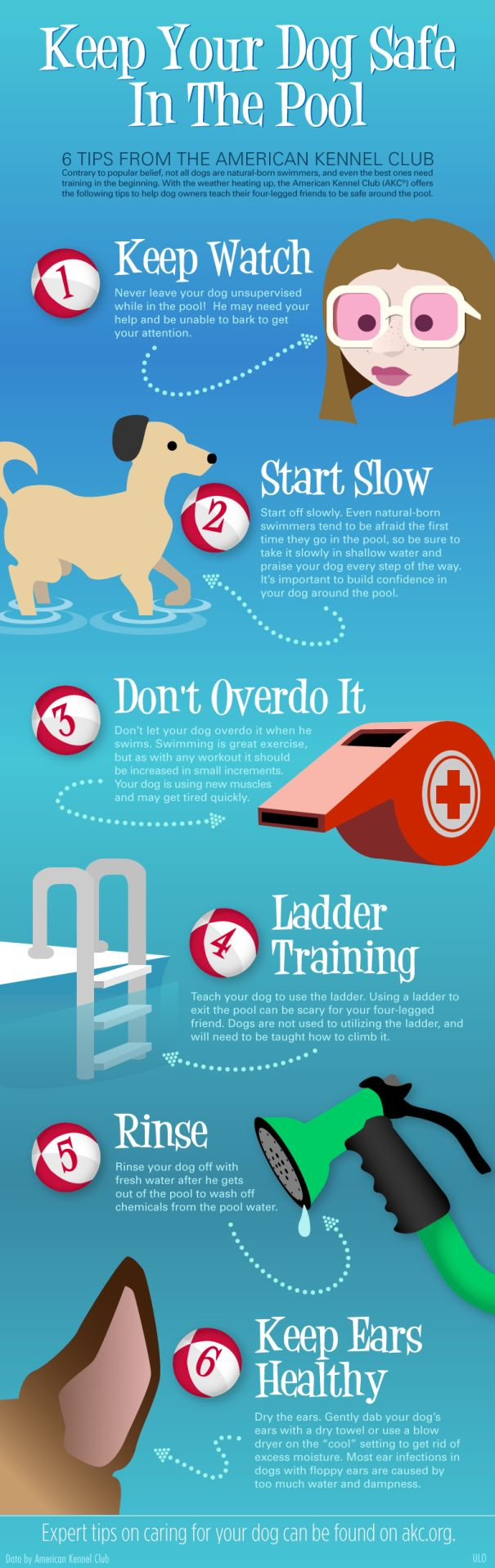 Pet Safety Infographic - keep your pet safe in and around pools in the summer