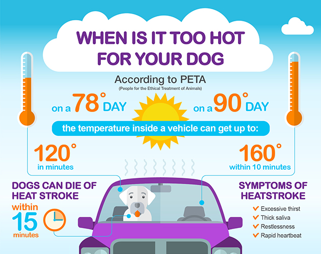 Don't leave your dog in a hot car - pet safety infographic