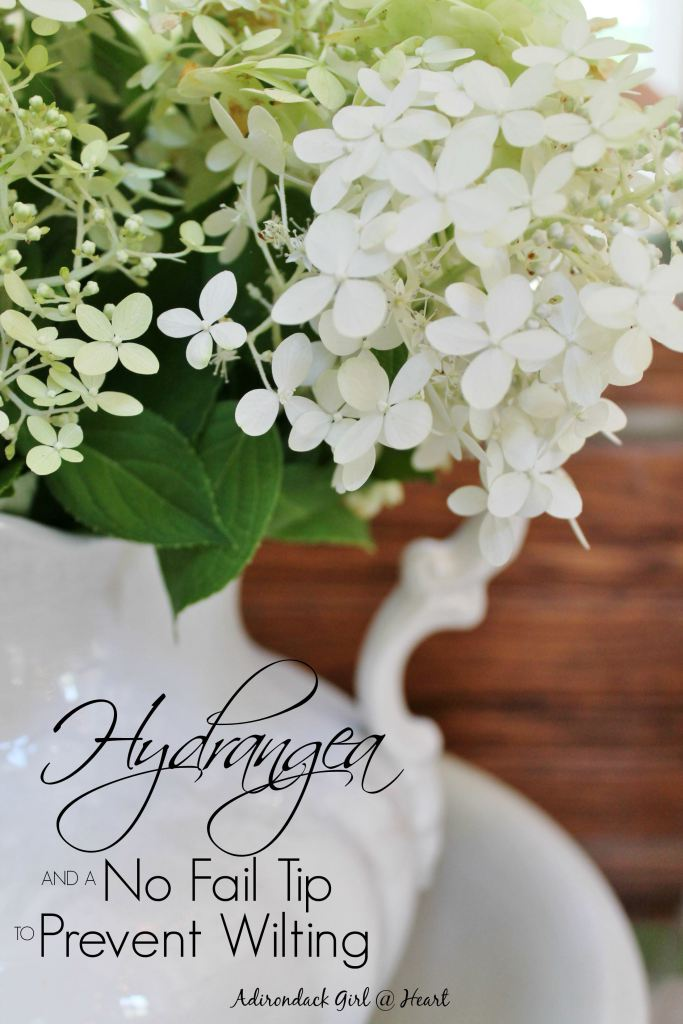 hydrangea-in-ironstone-cover