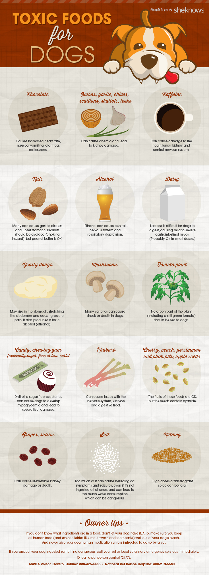 foods-toxic-to-dogs-infographic