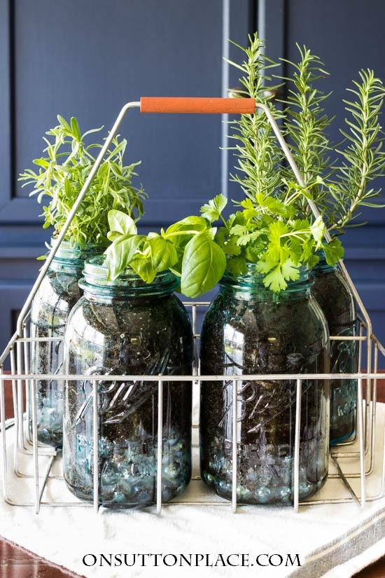 indoor-herb-garden-ball-jars