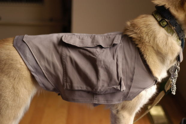 DoggyHack11