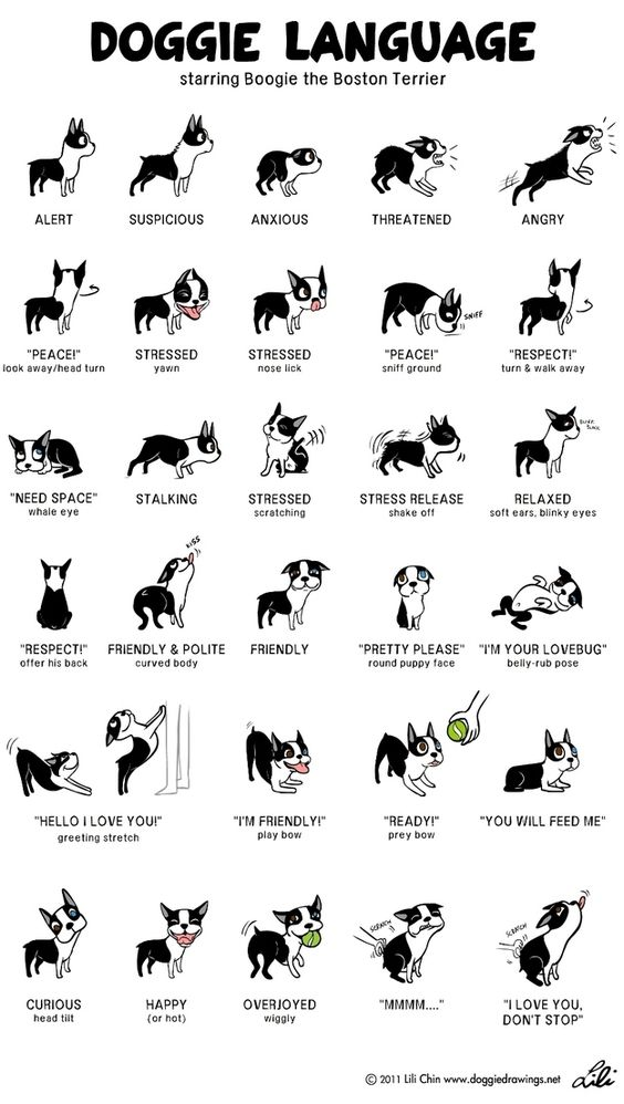DoggyHack17