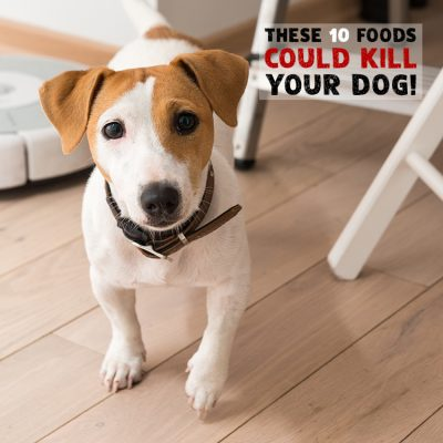These 10 Foods Could Kill Your Dog