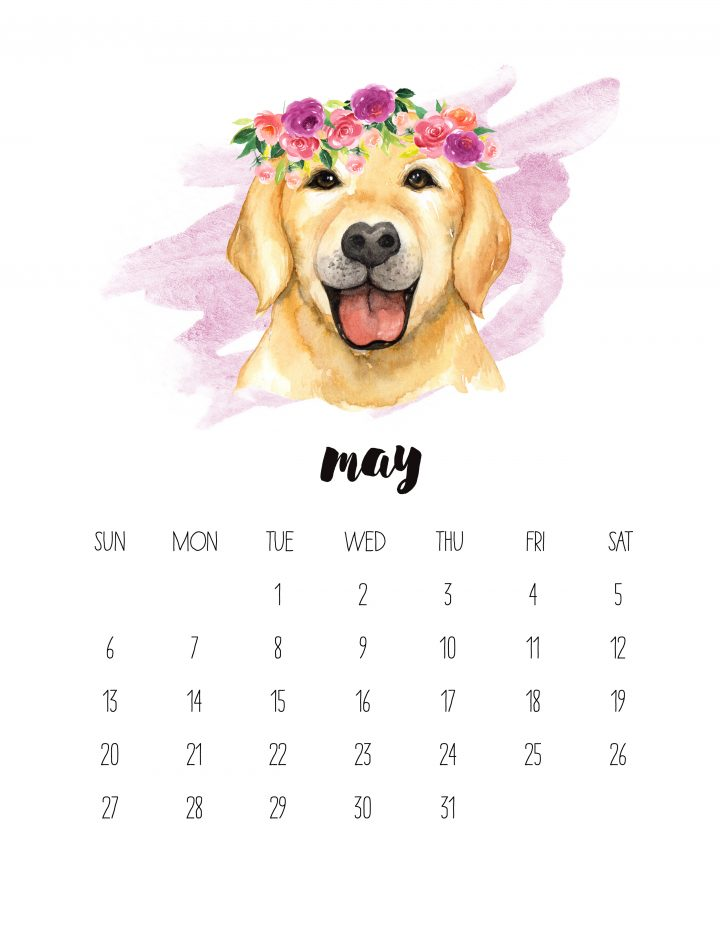 May of 2018 is a friendly golden face -- a golden retriever puppy is featured in this Watercolor Animals calendar
