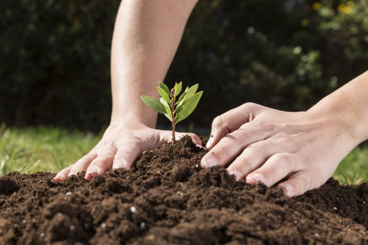 The soil you plant your hydrangea plants in matters! Rich soil with lots of sunlight is best