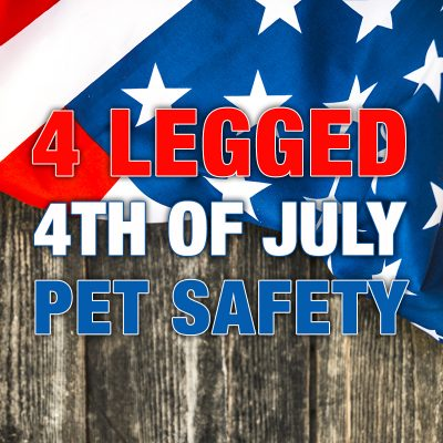 4 Legged 4th of July Pet Safety