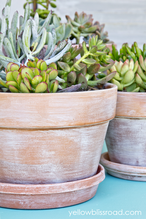 These succulents look great in these charming flower pots.