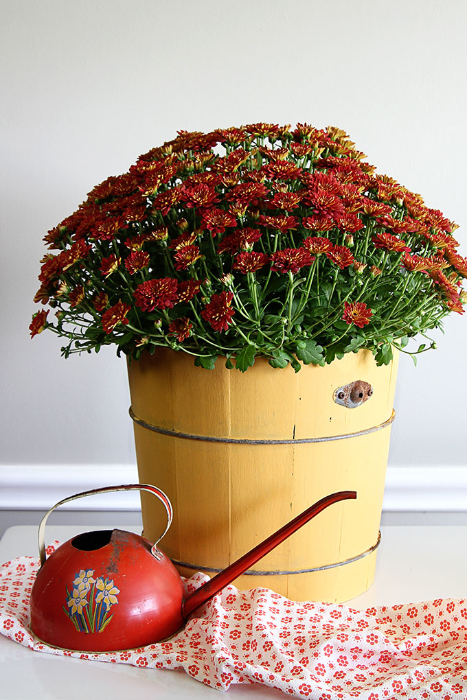 This vintage wooden bucket has a new life as a planter