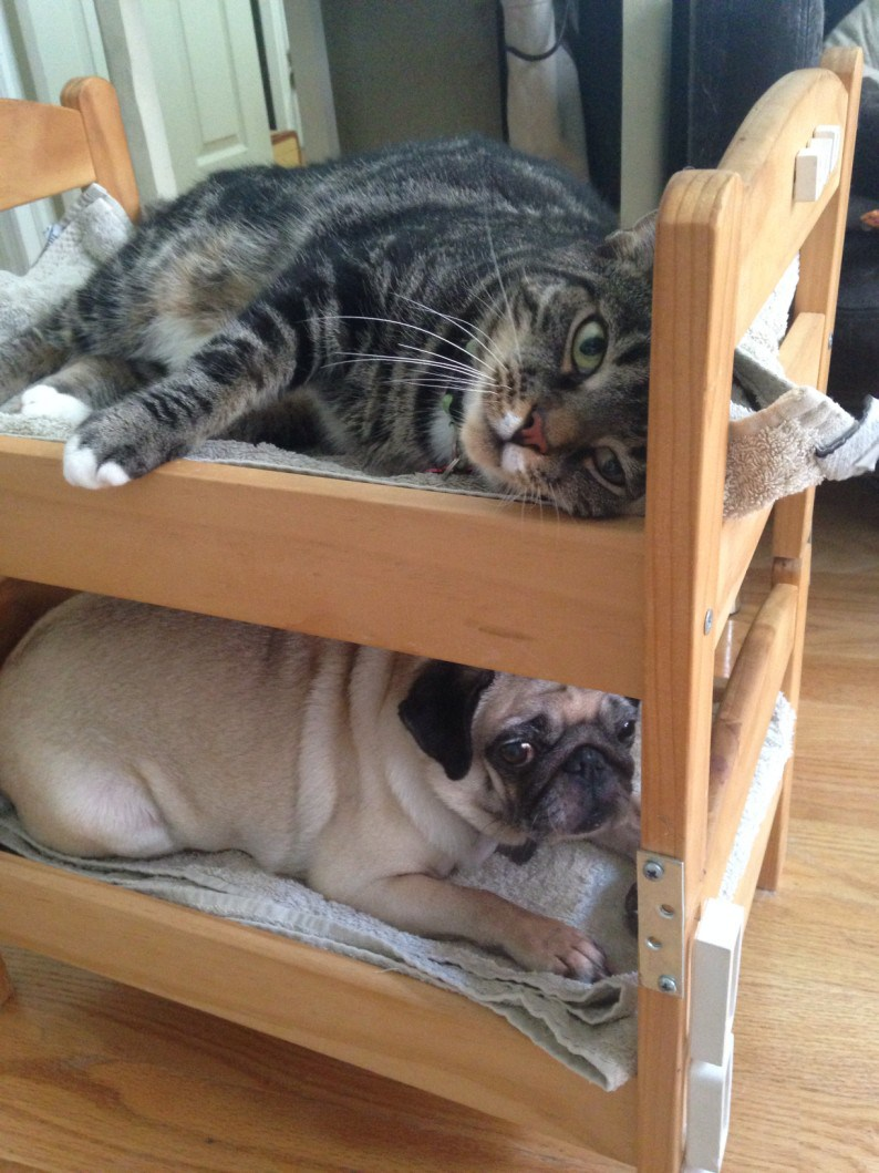 Picture of: The Ultimate Collection Of Ikea Hacks For Pets The Cottage Market